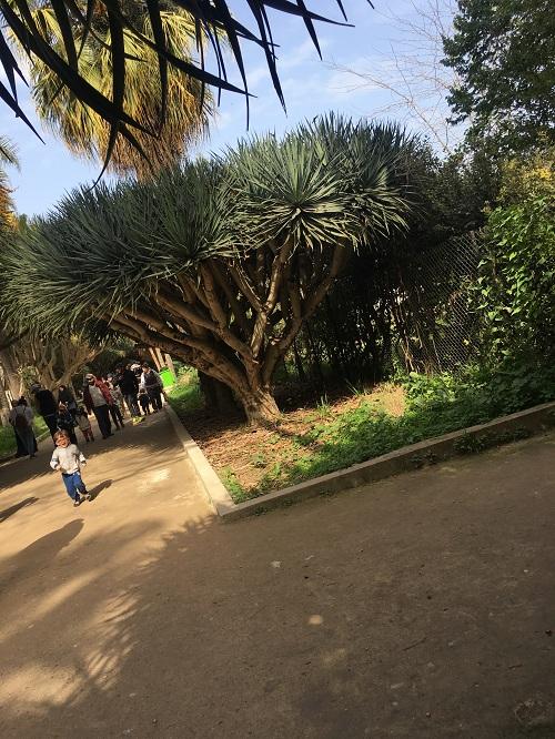 رحلتي الى الجزائر  ...!! تصويري 1491564593871.jpg